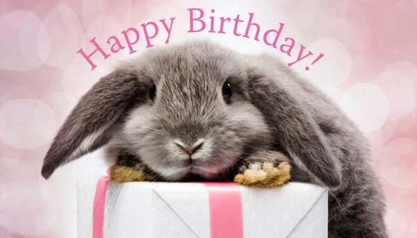 Bunny_Birthday.jpg.436ef7f6c06fe45f839017d7e8153f00.jpg