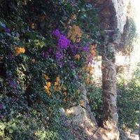Барселона, парк Гуэль, цветочки