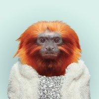 Приматы как люди